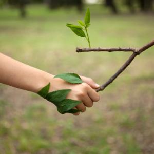 Percepció i hàbits ambientals 2019- Departament de Territori i Sostenibilitat